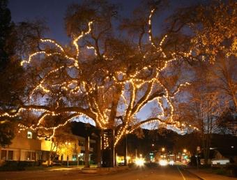Danville Tree Lighting tonight & Danville Tree Lighting tonight | News | DanvilleSanRamon.com | azcodes.com